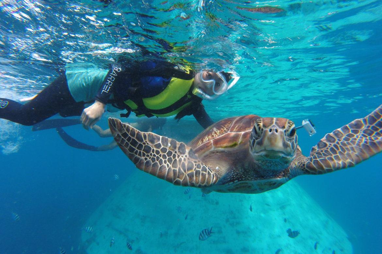 ウミガメと泳げる「フィッシュアイシュノーケリングツアー」